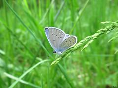 Butterfly 1682 (+1200000 views!) Tags: butterfly borboleta farfalla mariposa papillon schmetterling فراشة