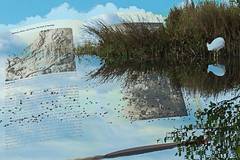 Where the Earth Meets the Sky (Karen Kleis (Back Sunday!)) Tags: earth sky water reflection egret book arteffects photomanipulation sharingart netartii artdigital ggg hypothetical awardtree shockofthenew
