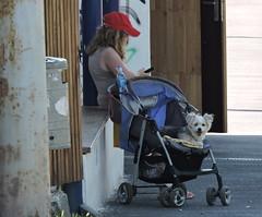 2018-06-07 Waiting for the Bus (beranekp) Tags: czech teplice teplitz anger bus stop girl dog