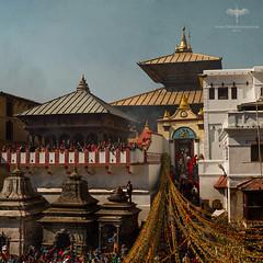 Asia / Nepal / Kathmandu / Pashupatinath Temple (Pablo A. Ferrari) Tags: pabloferrariart asia nepal kathmandu pashupatinath temple hindu funeral flowers people architecture templo hinduismo valley boy bagmatiriver gente arquitectura