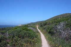 And the trail continues on... (rozoneill) Tags: point reyes national seashore bay area golden gate san francisco california coast trail hiking backpacking phillip burton