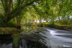 _VMG1315 (V.Maza) Tags: ríosarria sarria naturaleza naturalezaviva airelibre aldeasdegalicia lugo galicia bosque nikon d7100 vicentemaza