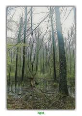 HET LAPPERSFORTBOS in SINT-MICHIELS / BRUGGE (3) (régisa) Tags: bruges brugge wood bois lappersfortbos bos sintmichiels westvlaanderen belgique belgië arbre tree thedurutticolumn