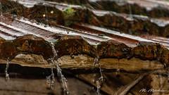 Rainy weather (Milen Mladenov) Tags: 2018 home varbovchets house nature rain raindrops raining road roof rooftiles splash water weather wood