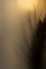 (PepaAston) Tags: spike sunset sun backlighting silhouette macro lensbaby lensbabytrio
