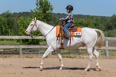 JBC_5984.jpg (Jim Babbage) Tags: krahc bethany appaloosa horses horseshow 2018