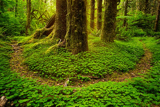 Forest Paths in the Pacific Northwest