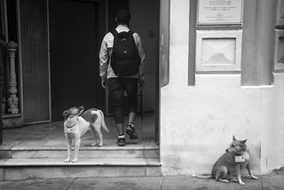 Old Havana's Adopted Street Dogs