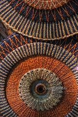 Círculos (Claudio Arriens) Tags: smctakumar55mmf18 círculos circles canoneos40d m42 manuallens