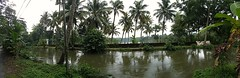 Flood time (Abraham Jacob N) Tags: flood river cocunuttrees kottayam kerala india nature