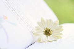 Fais de ta vie un rêve, et d'un rêve, une réalité.... (eleni m) Tags: flower plant book pages lepetitprince quote antoinedesaintexcupery dof background livre