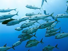 (sharksfin) Tags: sudan redsea ocean sea deep south deepsouth rotesmeer marine life