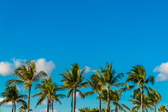 Picture of Warmth (SemiXposed) Tags: palm beach sky bali indonesia asia clouds trees outdoors blue
