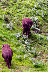 Munnar: Elephants (deepgoswami) Tags: india kerala munnar westernghats elephants