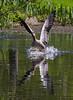 Goose Down (MrBlueSky*) Tags: greylaggoose goose bird animal waterfowl nature outdoor water colour kewgardens royalbotanicgardens london pentax pentaxart pentaxlife pentaxawards pentaxflickraward pentaxk1mkii aficionados