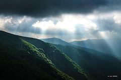 Luces y sombras (Jabi Artaraz) Tags: luz oscuridad rayos sol sun light montaña hayedo