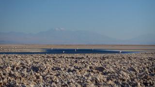 Andean Flamingo Breeding Site -  P1110243