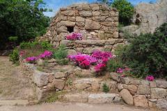 Corsica ! (StephLandAir) Tags: fleur fleurs printemps spring suddelacorse corsedusud corse mer sable rocher rochers eau baie sea sun zeiss carlzeiss zeisslens carlzeisslenses ciel