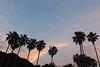 Dawn (Teruhide Tomori) Tags: tree morning moon dawn japan japon hiroshima takehara ohkunojimaisland nature landscape sky 朝 自然 風景 日本 大久野島 広島県 竹原市 月 ヤシ