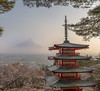 CHUREITO PAGODA (Juan C. Sánchez Photography) Tags: japón japon japanese japan beauty beautiful panorama landscapes landscape fuji mountain mountains mount fujimount chureito chureitopagoda pagoda sky sunset sun cherryblosom blossom sakura april march spring culture historico history place sony sonya6500 sonyalpha a6500 16mm sigma sigma16mm picture paisaje sighsee traveler travel vacations juancsancheztravel juancsanchezphoto instagram naturaleza natural nature allnaturesparadise