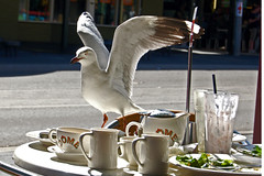 The Unwelcome Visitors-2 (AdamsWife) Tags: cafe dome meal tea lunch gull silvergull seagull bird visitor