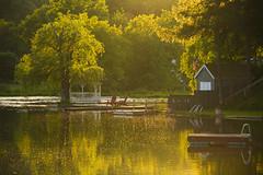 Summer Sundays (Matt Champlin) Tags: sunday sundayfunday sunset beautiful summer america usa americana peace peaceful nature lake lakeside awesome home house boat boating fish fishing como flx lakecomo canon 2018
