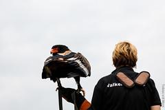 IMG_2845 (TvdMost) Tags: bateleur fotografieworkshop taibu terathopiusecaudatus valkerijschaap birdofprey roofvogel