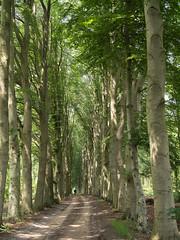 (Jeroen Hillenga) Tags: laan drenthe dwingeloo landgoed netherlands nederland landscape landschap bos