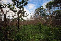 Oak Savanna (U.S. Fish and Wildlife Service - Midwest Region) Tags: minnesota mn spring june 2018 summer sherburne nwr refuge nationalwildliferefuge nature oaksavanna oak landscape tree