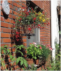 """Patch of the colorful chaos we call """"garden"""" (MaxUndFriedel) Tags: garden plants flowers basket colors chaos nemesia tomato chive pelargonium sun shadow wall"""