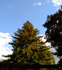 loom (jillian rain snyder) Tags: apartment building big sky clouds blue green