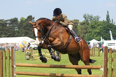 Warrington Horse Show (Pictures Of Horses) Tags: horse warrington show workinghunter jumping tabley 2018 may novice horseshow