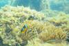 20180527-DSC_4527.jpg (d3_plus) Tags: landscape drive fish port apnea 晴れ 1030mm izu sea 伊豆半島 sky 魚 underwater 海岸 景色 風景 skindiving marinesports watersports wpn3 水中 空 マリンスポーツ japan fishingport 静岡県 ビーチ 静岡 westizu nikonwpn3 nikon1 素潜り ウォータープルーフケース 自然 伊豆 beach peninsula waterproofcase 漁港 2781mm fine snorkeling スキンダイビング nature 地形 diving 息こらえ潜水 ズーム 西伊豆 1030mmpd scenery shizuoka 日本 1nikkorvr1030mmf3556pdzoom fineday シュノーケリング 海