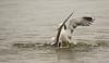 Meeuwen (kees torn) Tags: florafauna meeuw nieuwewaterweg hoekvanholland vogels