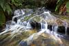 Between two Ferns (edwinemmerick) Tags: creek bluemountains nsw australia longexposure