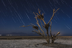 Star Trails And Dead Tree At The Salton Sea (slworking2) Tags: calipatria california unitedstates us saltonsea startrails starstax stars sky night tree dead lake playa deseret