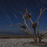 Star Trails And Dead Tree At The Salton Sea thumbnail