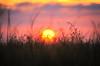 Depuis le monde des minimoys (Denis Vandewalle) Tags: sun sunset sunlight contrejour flou soleil coucherdesoleil