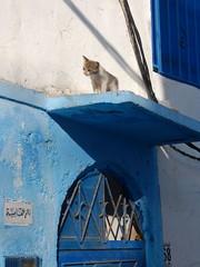 Kasbah des Udayas (Mulligan Stu) Tags: bouregreg blue unescoworldheritagesite blueandwhite morocco maroc kasbahdesudayas unescoworldculturalheritagesite rabat bouregregriver kasbah unesco white