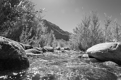 Whitewater River B&W (jtgfoto) Tags: approved whitewaterpreserve coachellavalley california nature outdoors sonyimages sonyalpha desert sky palmsprings adventure travel hiking landscape rock rocks mountains mountain water tree trees blackandwhite monochrome bnw bw whitewater river