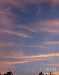 Tiger stripes (Aliceheartphoto) Tags: fineartamericaartist photography fineartamerica faa photographer photo pixelsartist sky clouds pink bluesky trees naturephotography nature weather weatherphotos photooftheday photoforsale photolove photootd cameragirl photographie amazingsky beautifulclouds sony cybershot