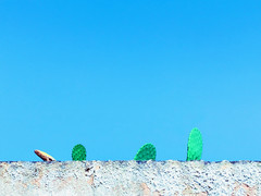 Untitled (marcus.greco) Tags: pricklypear nature colors tree minimal conceptual