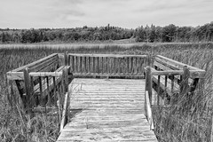 Wetland obseration platform at Purdon Conservation Area (shensicle) Tags: pond summer boardwalk bench lookout wood lanark blackandwhite swamp wetland