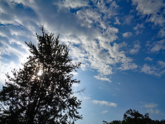 Morning Sky. (dccradio) Tags: lumberton nc northcarolina robesoncounty outside outdoors tree trees greenery treelimb treelimbs treebranch treebranches foliage plant branch branches cloud clouds sky bluesky sun sunlight sunshine nature natural morning friday fridaymorning goodmorning sony cybershot dscw830