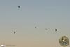 Orange County Sheriff Peace Officer Memorial (PhantomPhan1974 Photography) Tags: orangecountysheriffsdepartment ocsdasu ocsd bellhelicopters airbushelicopters uh1h uh1v as350b2 as350b3 n183sd n184sd n185sd n181sd n186sd