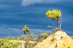 Aux Pinnacles (jeanmichelchuiche) Tags: nuages clouds toupet vert végétal nambung westernaustralia australie au tourdumonde costa luminosa costaluminosa 2017 aroundtheworld arbuste