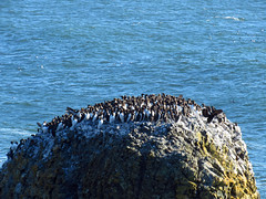 Seabirds at Yaquina Head Natural Area in OR (Landscapes in The West) Tags: yaquinahead naturalarea pacificcoast oregon pacificocean pacificnorthwest oregoncoast seabirds