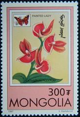 Catasetum pileatum (Sylvio-Orquídeas) Tags: selos stamps orquídeas orchids orchidaceae especies species flores flowers macro catasetum pileatum vanessa cardui