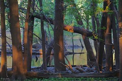 Enchanted Island (Gay Foster) Tags: mississippi river island sunlight shadows gay foster