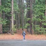Yosemite National Park thumbnail